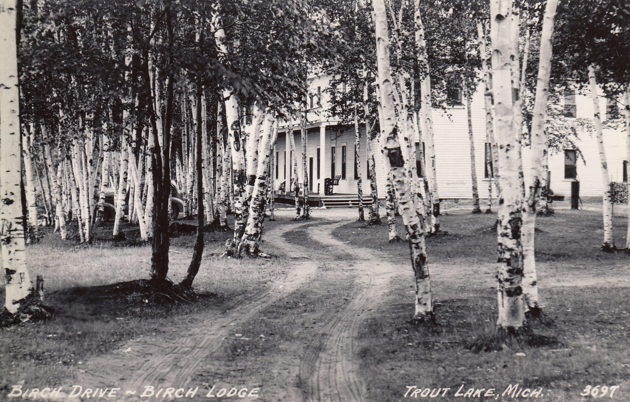 birch lodge #11